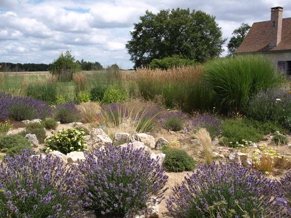 Baulette guest and garden in france for Dry garden designs